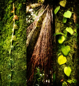 Rain_Forrest_Triptych